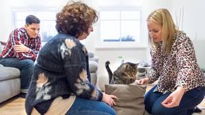 Florian Kühnel (l-r) Melanie Erker und Birga Dexel, Katzentherapeutin, lassen den Kater Louis als Übung über ein Kissen springen.