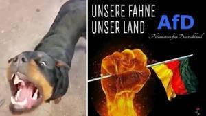 AfD: Der stern folgte einer Whatsapp-Gruppe der rechten Partei