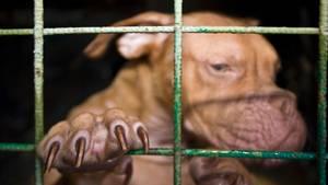Ein Hund steht auf den Hinterbeinen in einem Zwinger