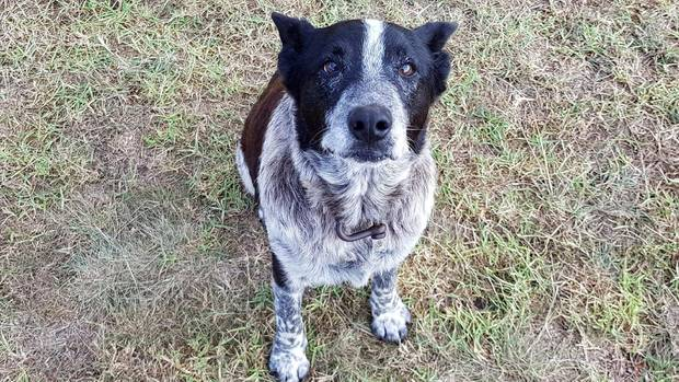 Hund Max blieb die ganze Nacht lang bei der Dreijährigen und beschützte sie