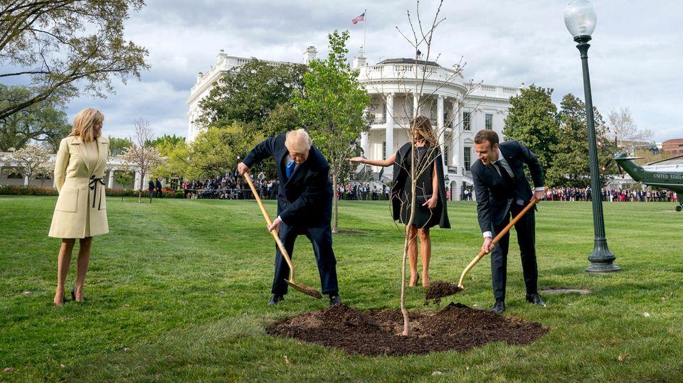 Donald Trump und Emmanuel Macron pflanzen eine Eiche