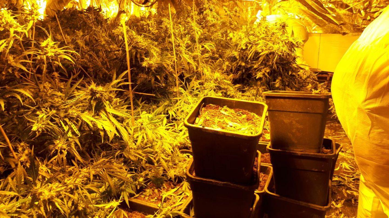 Cannabis-Anbau in einem Haus in Höxter