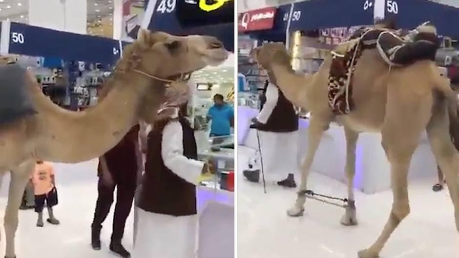 Ungewöhnlicher Kunde: Kommt ein Kamel ins Einkaufszentrum...