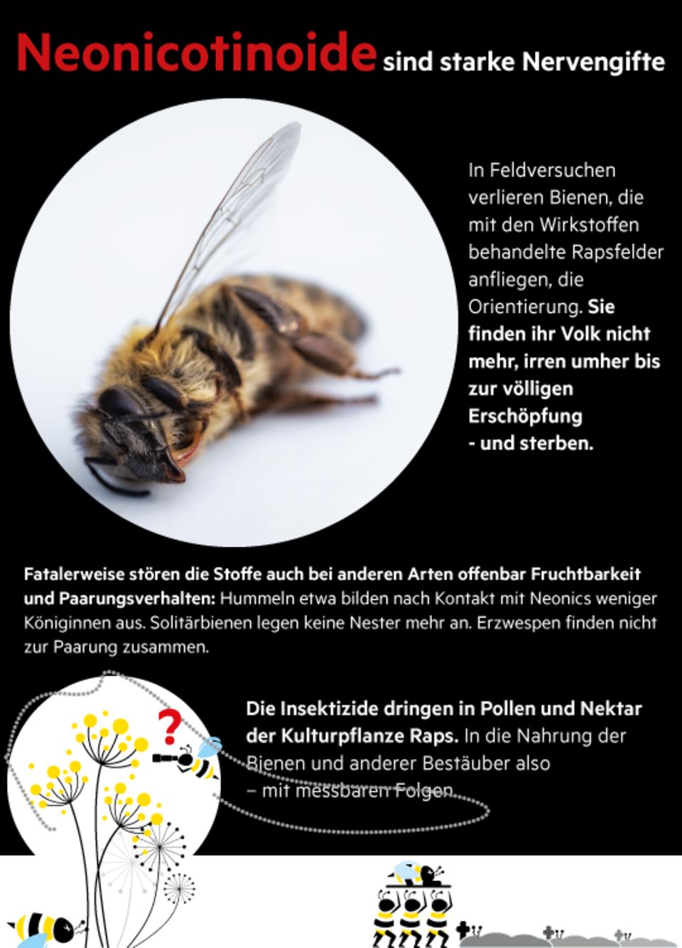 "Krankheiten, Pestizide, Parasiten: Imker über Bienensterben: ""Der Anblick erinnert mich an Contergan-Kinder"""