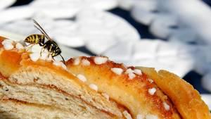 Wespen aller Art stehen in Deutschland unter Naturschutz - sie zu töten kann deshalb teuer werden