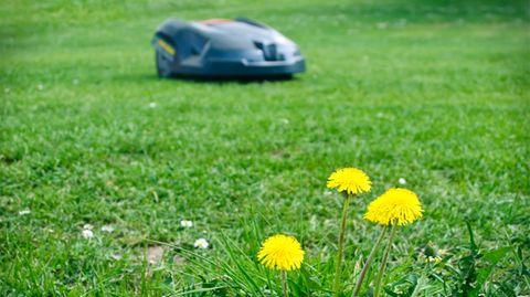 Verletzungsrisiko: Stiftung Warentest warnt: Diese Rasenroboter mähen auch krabbelnde Kinder