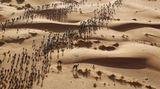 """Fotograf: Erik Sampers     14. April 2017    3. Preis im Segment """"Einzelfotos""""  Die Teilnehmer brechen auf zu einer Zeit-Etappe des """"Marathon des Sables"""", in der Sahara-Wüste im Süden Marokkos.    Dieser """"Marathon des Sands"""" geht über eine Strecke von über 250 Kilometern bei Temperaturen von bis zu 50 Grad Celsius. Die teilnehmenden Läufer und Wanderer müssen ihre Verpflegung und alle persönlichen Utensilien selbst im Rucksack tragen. An sieben Tagen gibt es sechs Etappen, davon eine besonders lange Etappe von über 80 Kilometern. Der erste """"Marathon des Sables"""" fand 1986 mit 186 Teilnehmern statt. Heute kommen über 1000 Teilnehmer aus rund 50 Ländern zu diesem Lauf."""