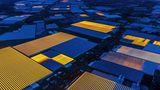"""Fotograf: Luca Locatelli     2. Oktober 2016 - 9. März 2017    2. Preis im Segment """"Serien""""  Die Niederlande sind so klein und dicht bevölkert, dass großflächige Landwirtschaft gar nicht möglich ist. Dank innovativer Anbaumethoden hat sich das Land aber zum wertmäßig zweitgrößten Lebensmittelexporteur der Welt entwickelt. An erster Stelle stehen die USA, mit einer 270-mal so großen Fläche. Die damit verbundene Forschungsarbeit wird größtenteils im Universitäts- und Forschungszentrum Wageningen (WUR) durchgeführt. Dieses Zentrum gilt allgemein als weltweit führendes Institut der landwirtschaftlichen Forschung. Hier dargestellt sind Gewächshäuser im Westland. In dieser Gegend sind 80 Prozent der Anbauflächen unter Glas."""