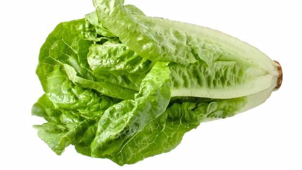 Römersalat mit E. coli-Bakterien verseucht