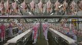 """Fotograf: George Steinmetz    13. Juni 2016 - 9. Juli 2017    2. Preis im Segment """"Serien""""  In China hat der steigende Wohlstand zu anderen Ernährungsgewohnheiten und einer steigenden Nachfrage nach Fleisch, Milchprodukten und verarbeiteten Lebensmitteln geführt. Mit den Erträgen von rund 12 Prozent der globalen Ackerfläche muss China fast 19 Prozent der Weltbevölkerung ernähren. Teilweise lässt sich dies durch neue Technologien und Agrarreformen lösen. Die Versorgung bleibt aber problematisch, je mehr Bauern und junge Menschen zum Arbeiten in die Städte ziehen, die Landbevölkerung überaltert und je mehr Ackerflächen der Industrie weichen müssen.    Hier verarbeiten Arbeiter Fleisch im Zerlegeraum von Jinluo Meat in Shandong im Osten von China."""