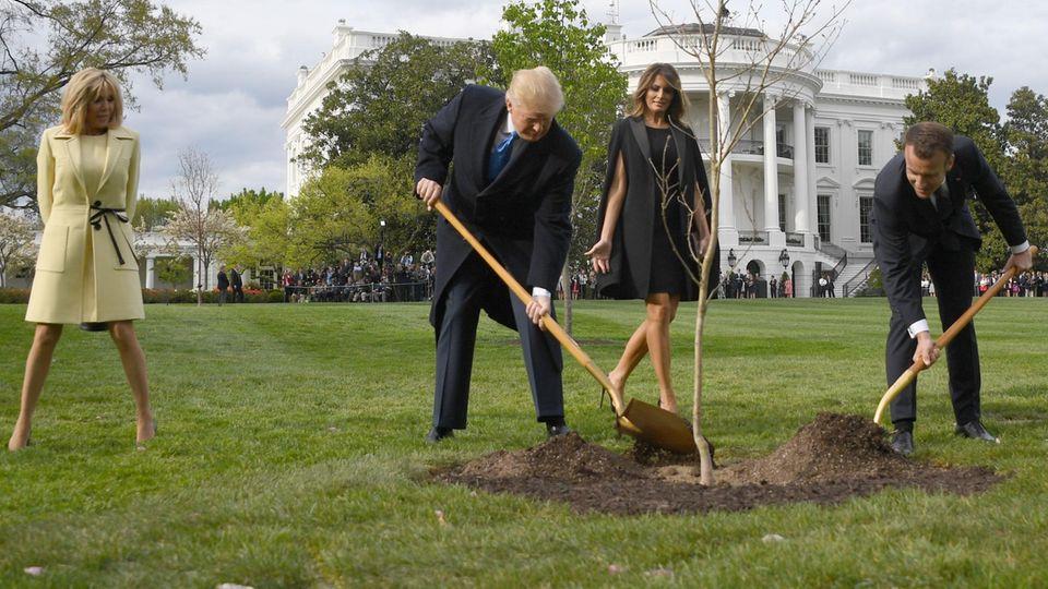 Baum von Donald Trump und Emmanuel Macron: Wo ist die Eiche?