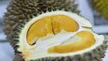 Eine aufgeschnittene Durian-Frucht