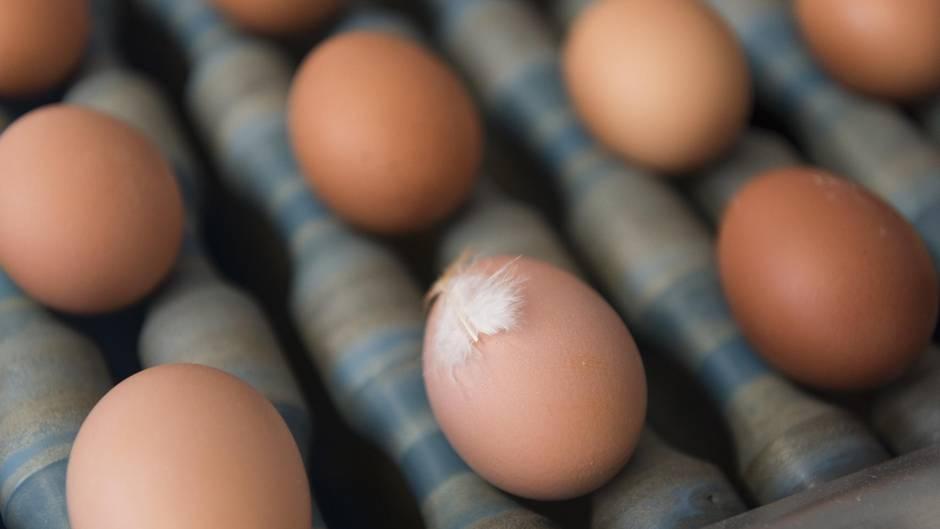Fünf Supermärkte rufen Eier wegen Salmonellen-Befalls zurück