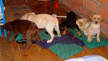 Tierarzt - Hundewelpen - Heroin - Drogen - Schmuggel