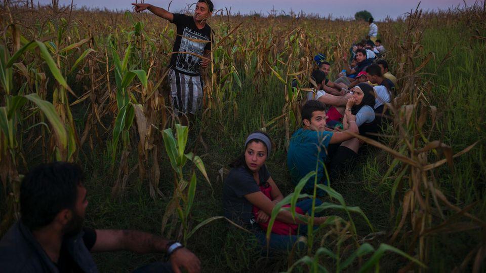Versteck im Maisfeld: Mardini (3. v. l.) während ihrer Flucht durch Ungarn im Sommer 2015