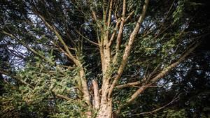 Mönchengladbach: Geschichte eines Jungen, der tot in einem Baum saß