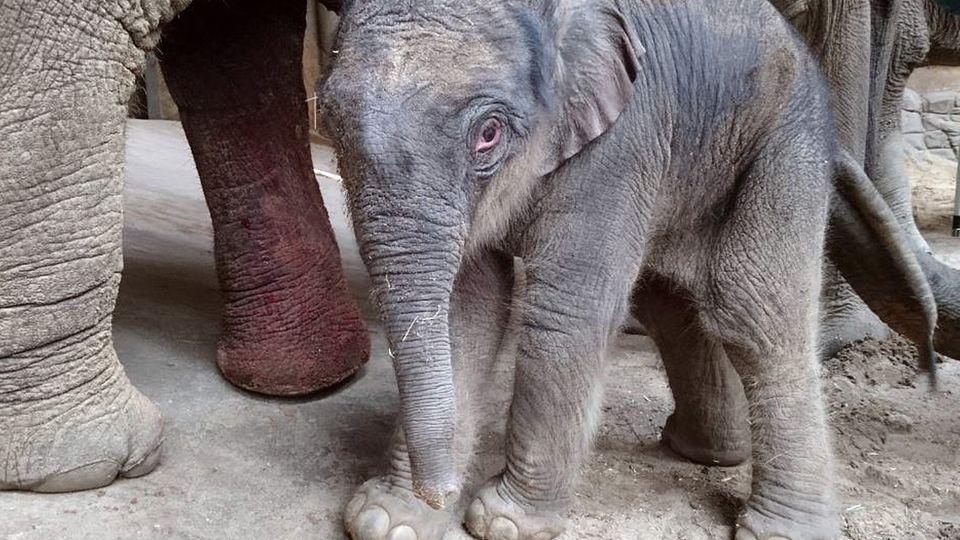 Elefantenbaby Hamburg