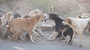 Sechs Kinder in Indien von wilden Hunden zerfleischt
