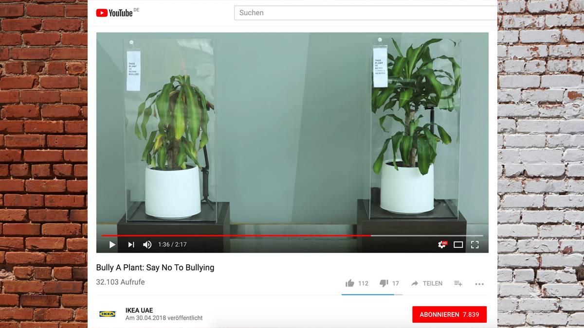 Youtube Video Mobbing Experiment Mit Einer Pflanze Von Ikea Neon