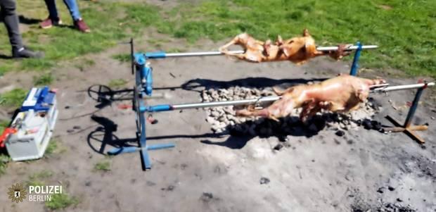 Zwei Schafe an batteriebetriebenen Drehspießen
