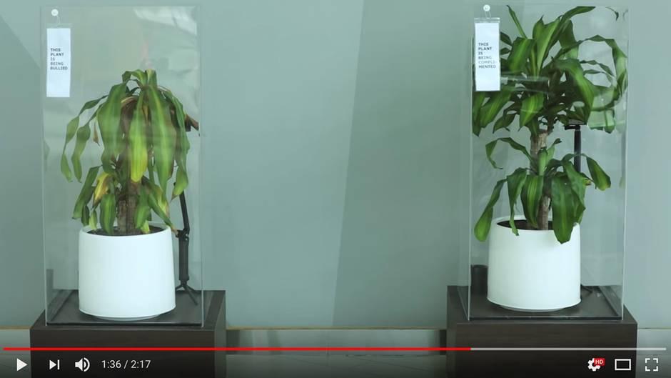 Ikea-Werbespot: Mobbing bei Pflanzen: Wie gut düngen Komplimente?