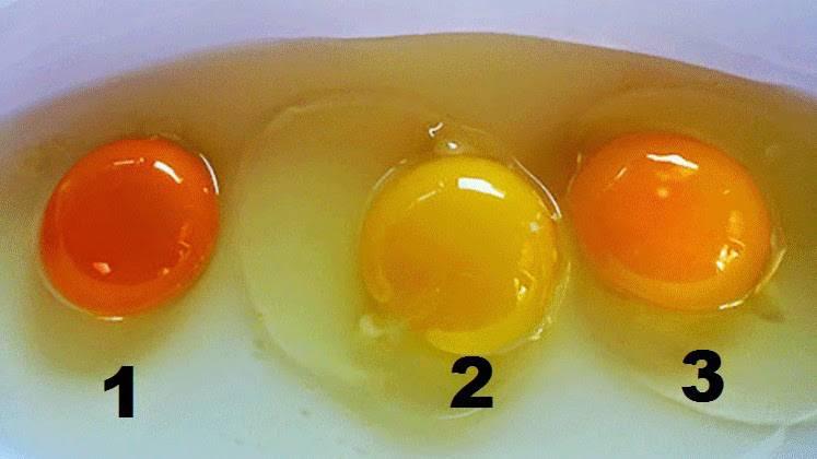 Lebensmittel-Quiz:  Das verrät die Dotter-Farbe: Erkennen Sie das gesündeste Eigelb?
