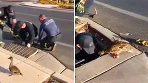Feuerwehr rettet Entenfamilie