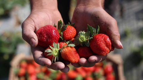 Erdbeersaison 2021