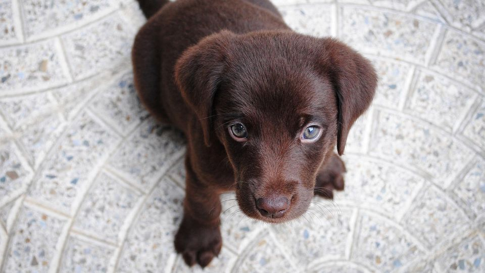 Hund auf Twitter Thoughts of Dog