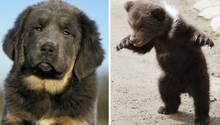 ein hund und ein bär