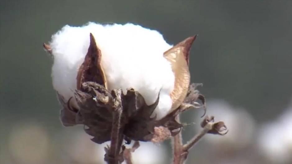 Baumwollhochzeit: Darüber freut sich der Partner am Hochzeitstag