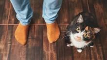 Diese Krankheiten können von Katzen auf den Menschen übertragen werden