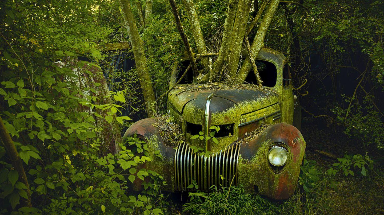 """Bild 1 von 13der Fotostrecke zum Klicken:Dieses grüne Biotop mit einem Chrysler Imperial aus dem Jahre 1939 fand Dieter Klein im Bundesstaat Georgia - eines von seinen Motiven, die in seinem Doppelband """"The Fabulous Emotion - RetiredAutomobiles of North America"""" erschienen sind."""