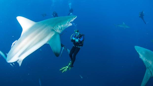 Haitauchen wie am Nacktbadestrand der Rentner auf Gran Canaria: Einfach nicht hingucken. Sollte man aber!