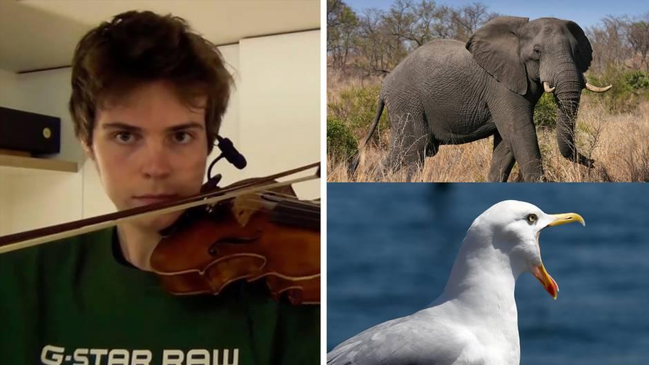 Akustische Täuschung: Verblüffende Ähnlichkeit: Dieser junge Musiker imitiert Tiere perfekt auf seiner Geige
