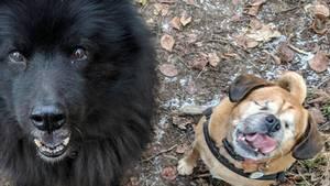 Die zwei Hunde aus England Rosie und Diesel