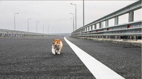 Umstrittene Krim-Brücke eingeweiht: Diese Katze stahl Putin bei seinem Lieblingsprojekt die Show