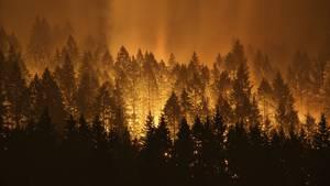 Das Feuer wütete im September auf fast 200 Quadratkilometer