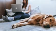 Das Leben mit einem Hund kann sehr gemütlich sein, wenn nur die Haare nicht wären.