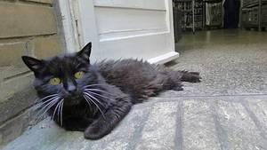Schwarze Katze liegt auf dem Boden