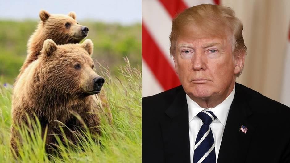 Alaska: Trump will Jagd auf Wolfswelpen und Jungbären wieder legalisieren
