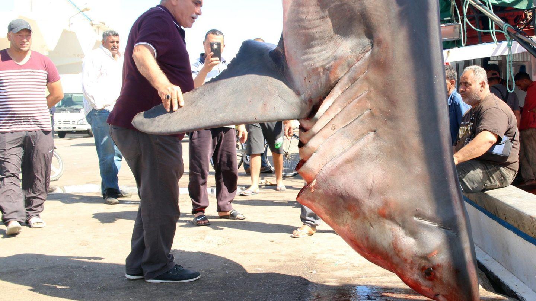Tunesische Fischer begutachten den Hai