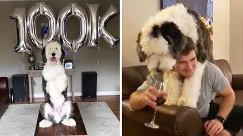 Otis hat 100.000 Follower auf Instagram