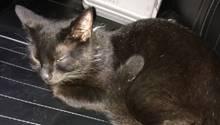 Katze auf dem Rücksitz eines Streifenwagens