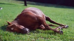 Pferd weide