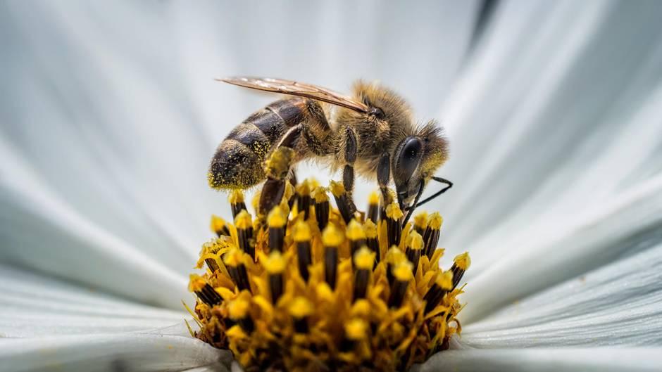 Rettet Die Bienen Warum Ihr Verschwinden Unser Aller Leben Bedroht