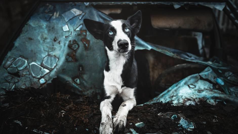 """Urbexlove - """"Hinterhofromantik beim Hundebesitzer, solche einzigartigen Lost Places sind überall zu finden."""""""