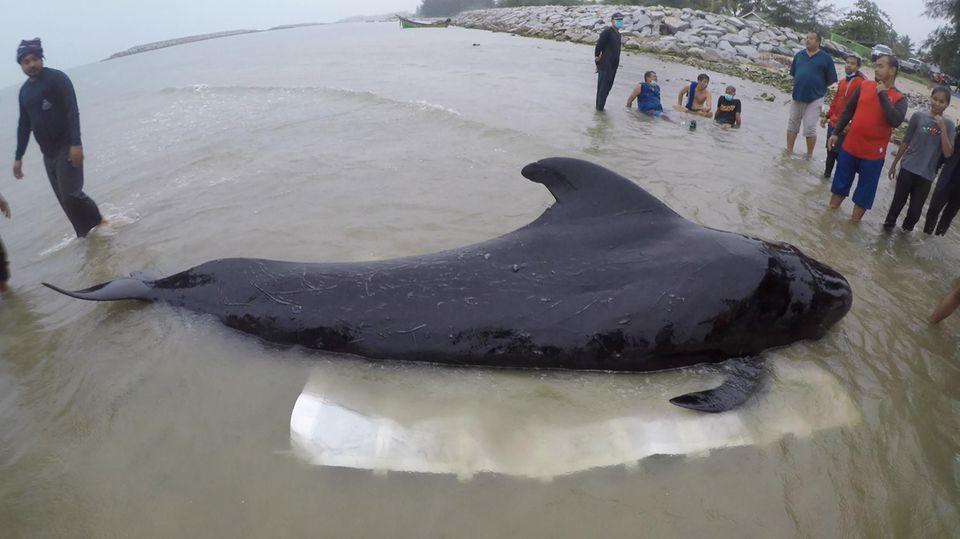 Der Wal liegt in einem Kanal