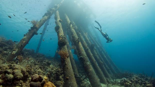 """""""Wohl einer der beliebtesten Tauchplätze auf Bonaire. Meiner Meinung nach zurecht. Die Kreuz und Quer platzierten Pfeiler allein bilden schon eine schöne Kulisse, die an Taucher gewöhnten Fischschwärme machen es richtig rund."""""""