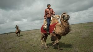 Russland: Kamele sind in Kalmückien unverzichtba
